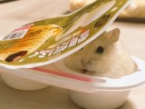 Hamsters perfectly fit in the ice cream container look just incredibly kawaii