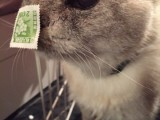 What is this cat going to do with the stamp on its nose?